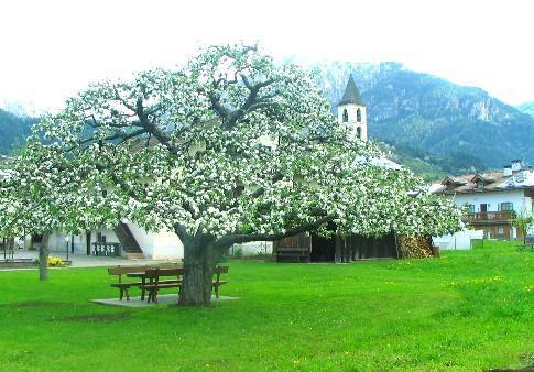 melo a Masi di Cavalese, via della chiesa, 48, della signora Carla Demarchi