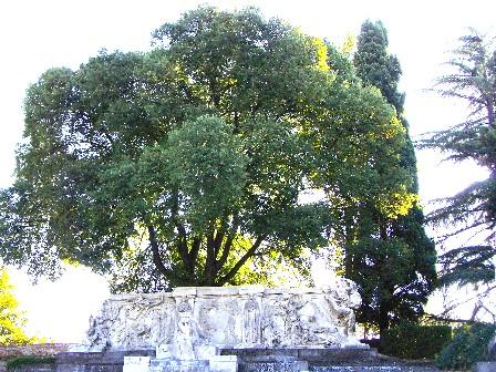 Bagolaro dietro il monumento a Carducci