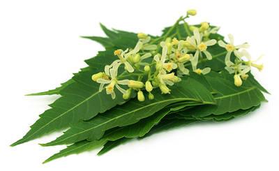 neem-foglie-fiore