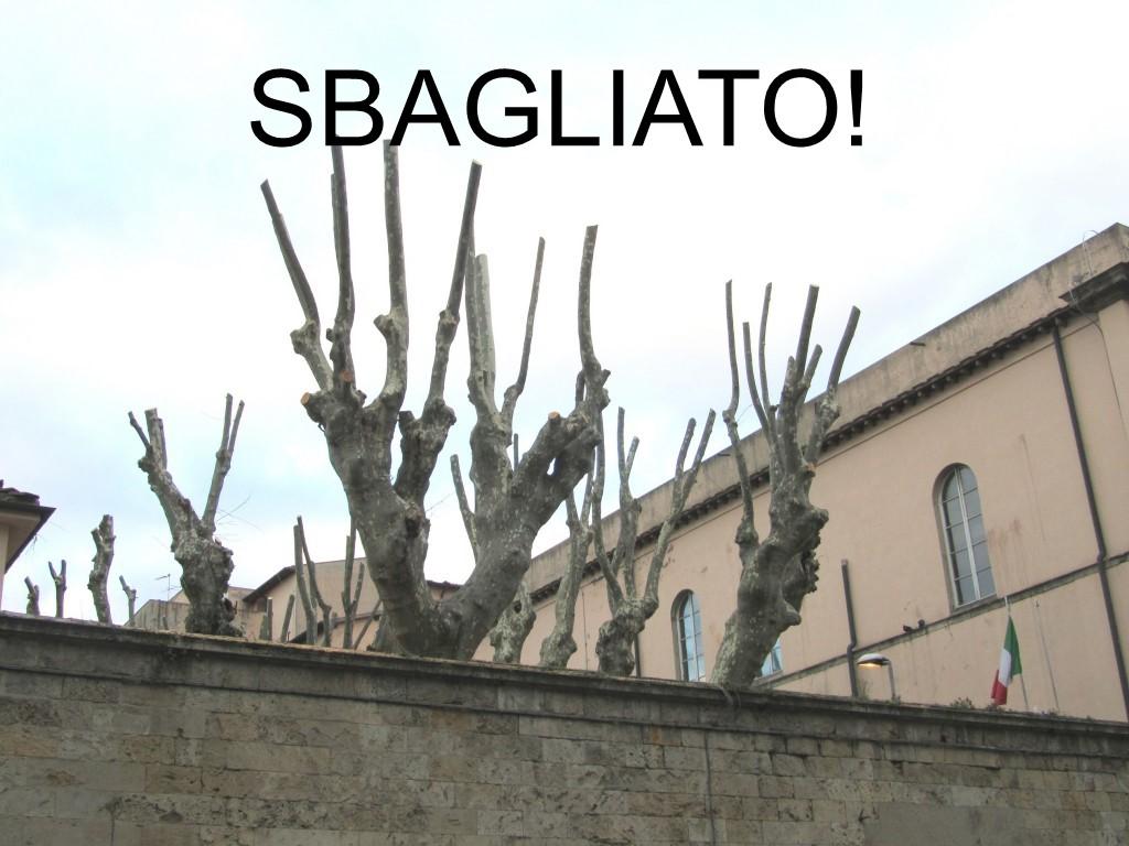 Quando Potare Il Glicine potare gli alberi   a scuola dagli alberi