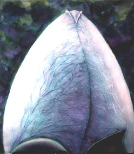 cano negro, ecoline 1994