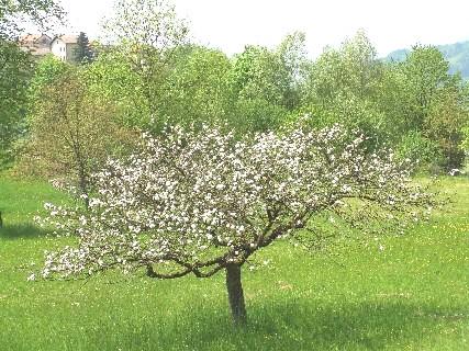 melo fiorito