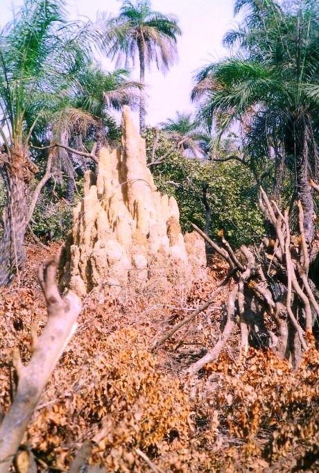 termitaioleg