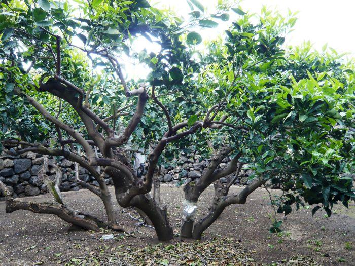 giardino-pantesco-donnafugata