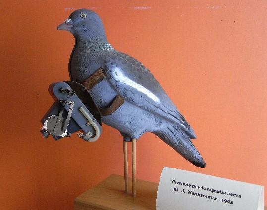 modello di piccione con macchina fotografica, proprietà del Museo dell'aria (vedi articolo)