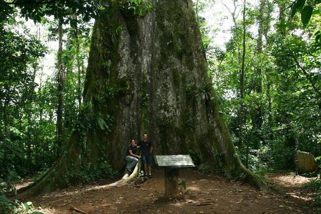 arbol de la paz -  Parque volcan Tenorio - da costarica.com