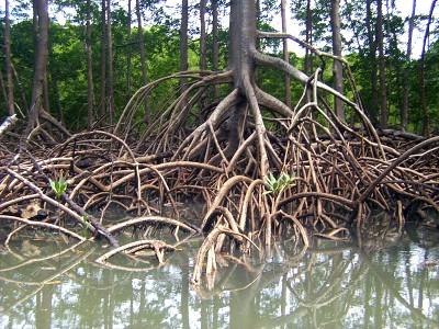 mangrovie - foto da unimondo.org