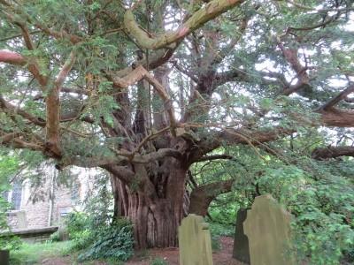 tasso cimitero Ulcombe GB Wim Brinkerink