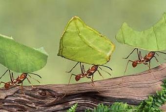 formiche-tagliafoglie da Paperblog