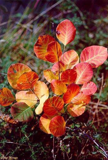 scotano-foglie