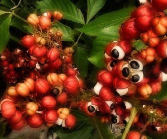 caffe-frutti-da-inerboristeria-com